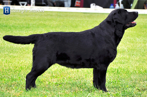 holsteps jezebel pres2