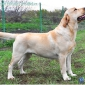 empire_holsteps_atlabelex5