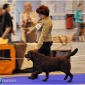 holsteps_happy_sappy_kiev13