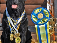holsteps_jezebel2