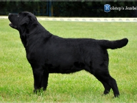 holsteps_jezebel_dn1