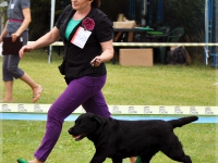 holsteps_jezebel_dn2