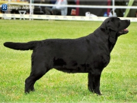 holsteps_jezebel_dn4
