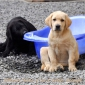 puppies_lola_achilles5