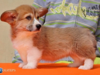 puppies_ponka_sulo