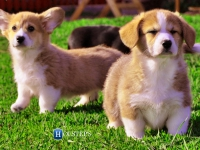 puppies_ponka_sulo4