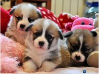 puppies_ponka_simon_group