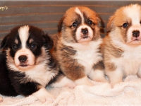 puppies_ponka_simon_group1