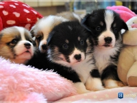 puppies_ponka_simon_group2