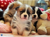 puppies_ponka_simon_group3