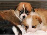 puppies_ponka_simon_group4
